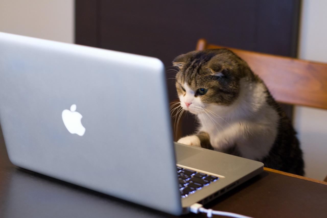 cat-on-mac