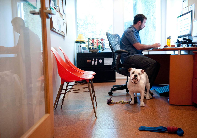 dog-in-office