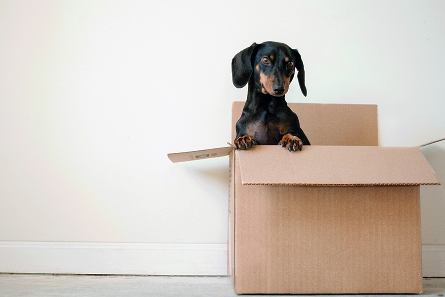 Office Move Disruption and how to avoid it